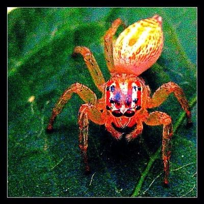 Insects  Spider Macro Colors