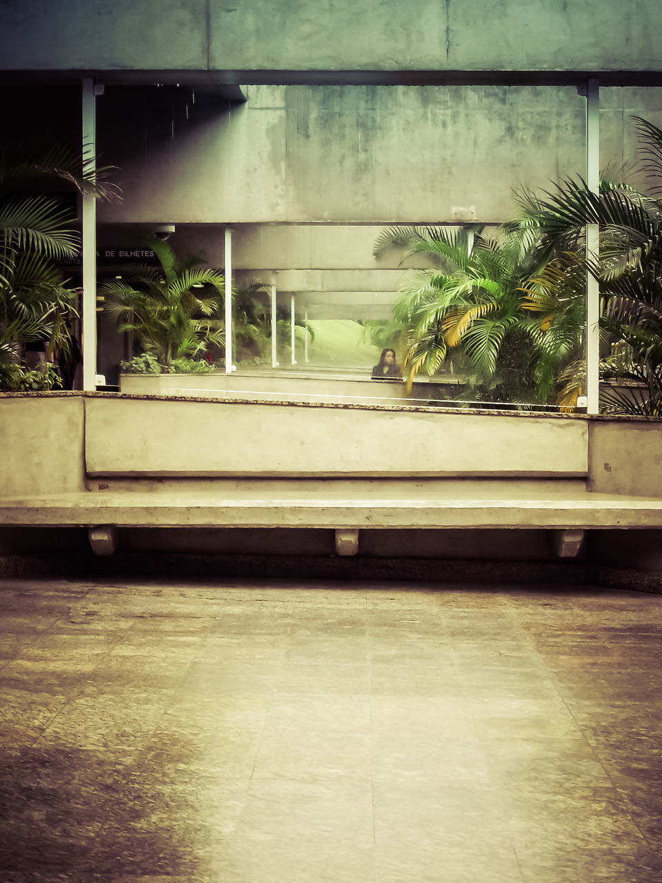 no people, window, day, indoors, palm tree, tree, architecture, nature, close-up