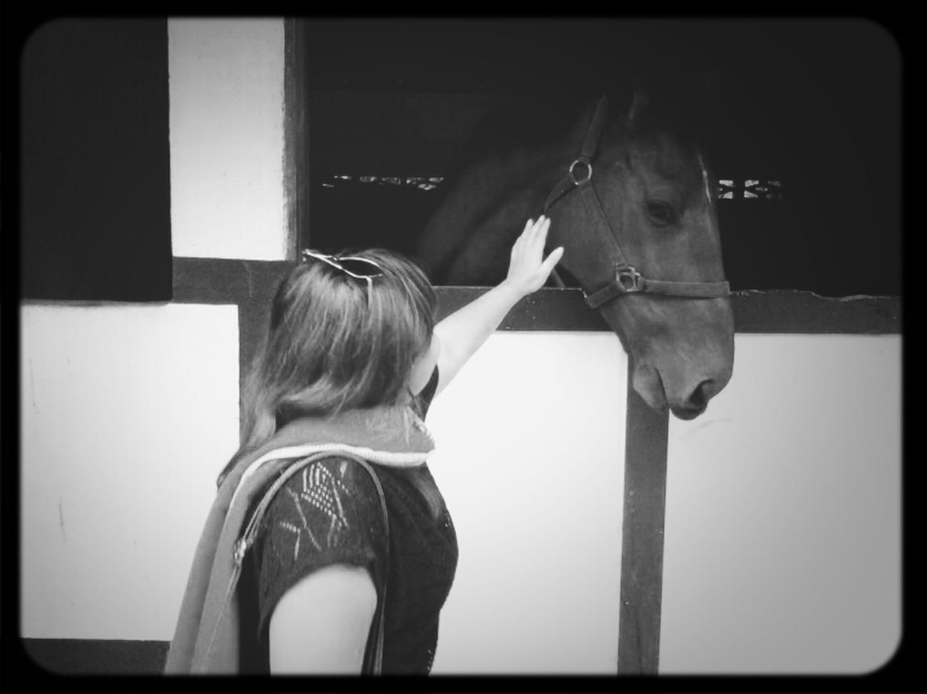 a shy Horse Black & White ^_^