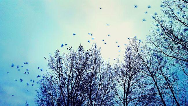 The Ravens on the tree 🌲. Trees Ravens Nation Ravenswood Ravens ! Ravens All Day Skyporn Sky And Clouds The Birds The Birds And The Bees The Black Birds