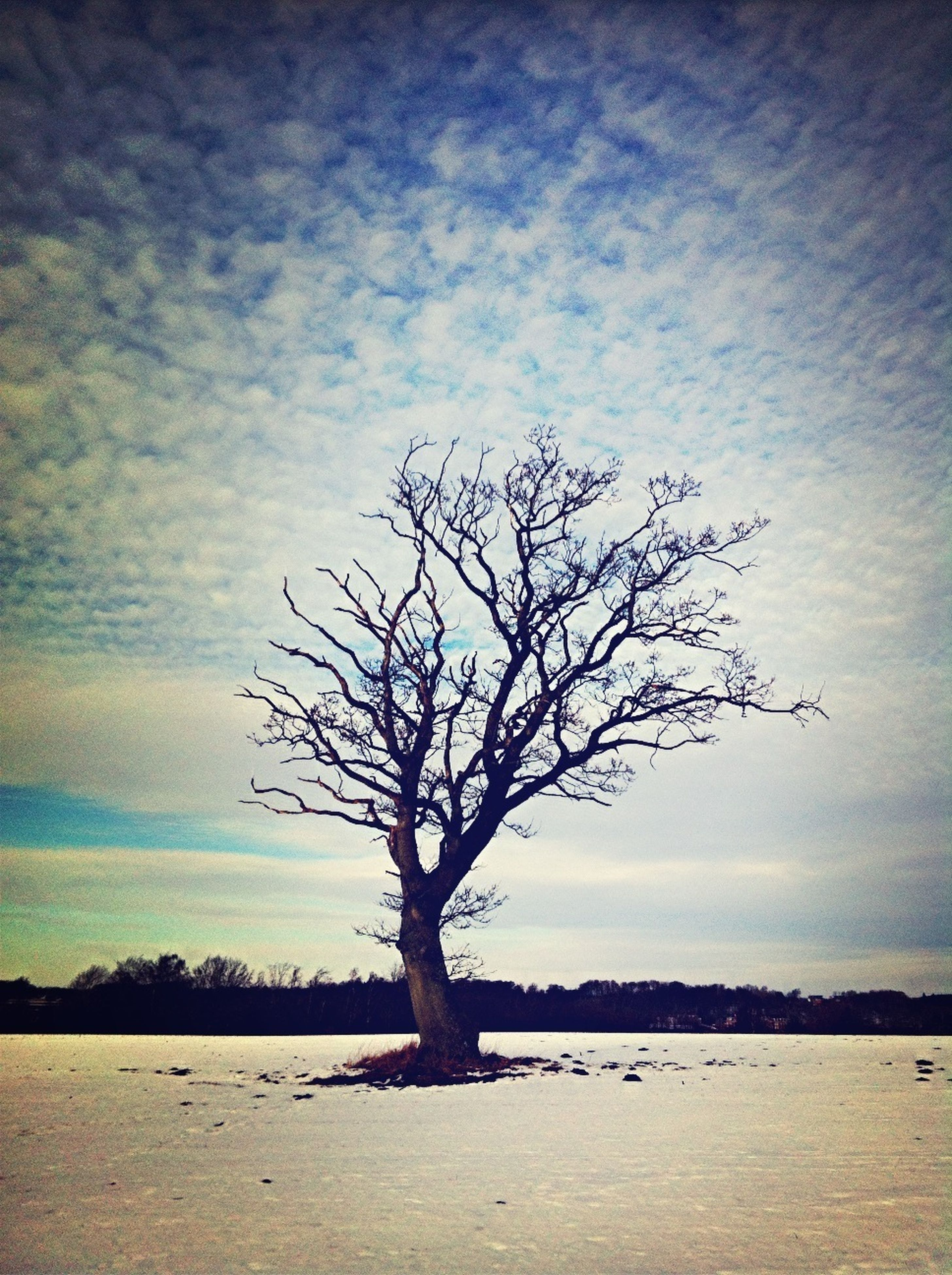 bare tree, tranquility, tranquil scene, water, tree, sky, branch, scenics, beauty in nature, nature, lake, silhouette, tree trunk, cloud - sky, landscape, idyllic, non-urban scene, sea, cloud, no people