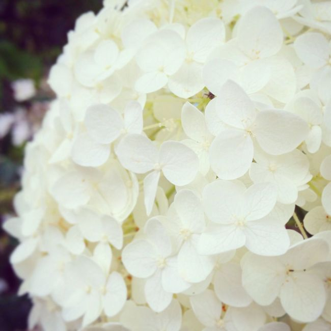 Flowers Flower Collection Flowerporn White