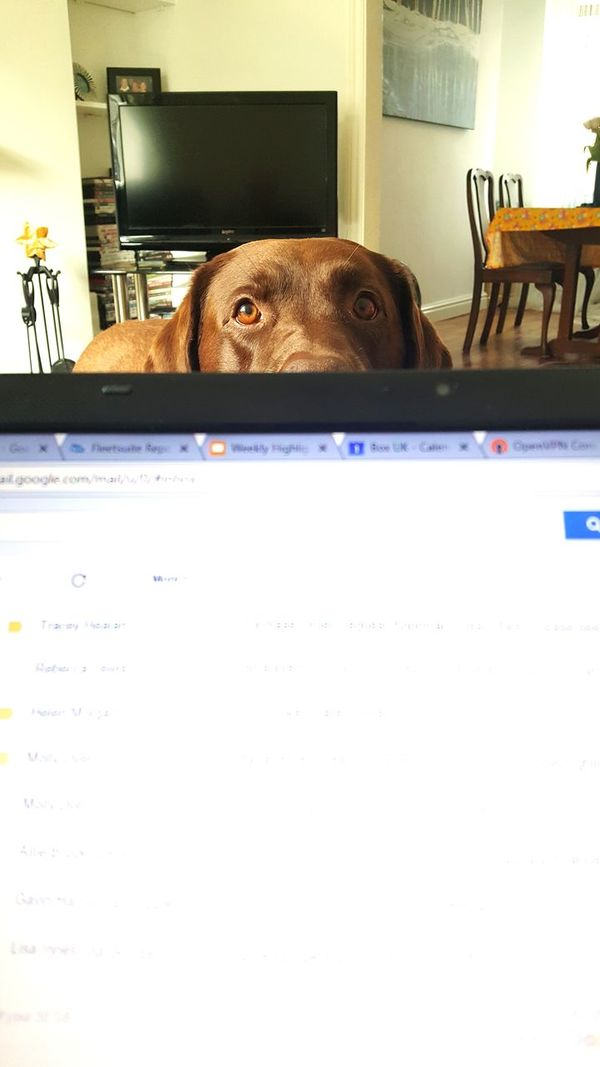 Indoors  No People Day Dog Laptop Working From Home Emails Helper Pet Portraits