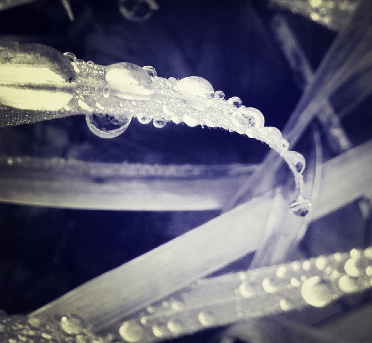 cold temperature, ice, frozen, winter, close-up, icicle, no people, water, frost, drop, outdoors, day, hanging, purity, snow, ice crystal, freshness, nature, beauty in nature, dripping
