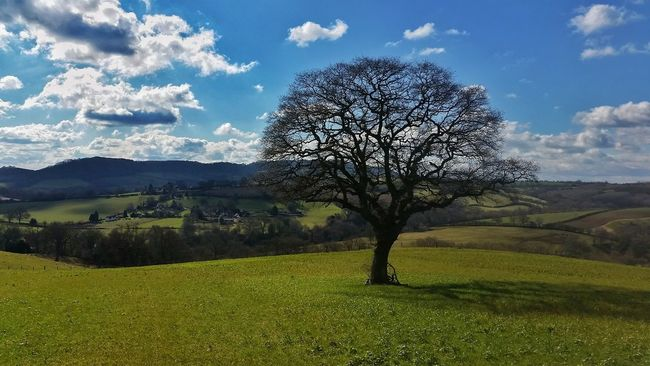 England I Love My Country Landscapes With WhiteWall Showcase March Rugby6 Nations England Vs Wales Swing Low Sweet Chariot 👉 https://youtu.be/JOvQt9c-8F8 👈 🙌🙌🙌🎉🌹🏉🌹🎉 England 🌹 Hugging A Tree Euphoric Great Win ...If you don't follow Rugby I hope you enjoy the picture! 😄✌ Q Quintessential English Scene Eye4photography  EyeEm Nature Lover Exceptional Photographs Tadaa Community Beautiful Nature Malephotographerofthemonth