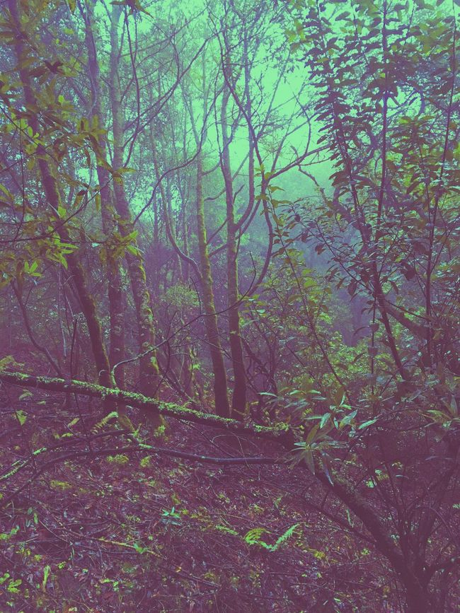 Exploring the local flora &I fauna. Exploring Nature