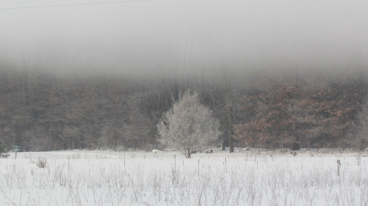 Bare Tree Clear Sky Cold Cold Fog Cold Temperature Desert Field Foggy Landscape Frozen Tundra Landscape Nature Non-urban Scene Outdoors Remote Rural America Rural Landscape Rural Michigan Snow Tranquil Scene Tranquility Weather Winter Winter In Michigan