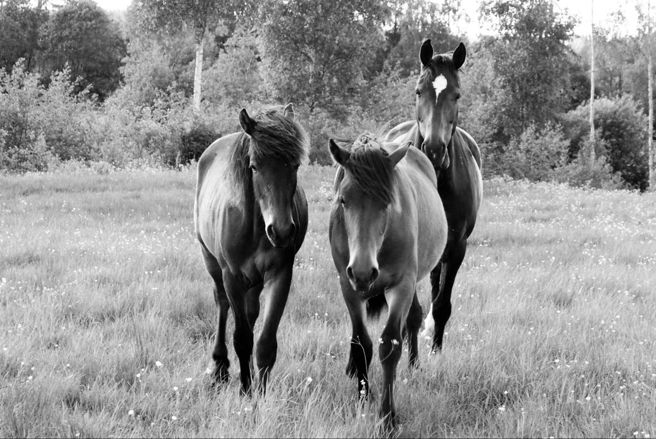 Blackandwhite Love Horse Sweet Little Horses