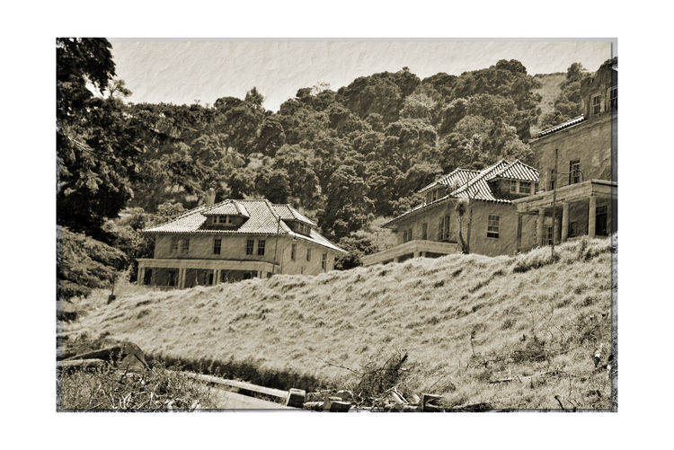 Officer's Row At Angel Island 3 Tiburon, Ca. Fort McDowell East Garrison Angel Island U.S.Army Officers Row Officers Quarters Built By Military Prison Labor From Alcatraz Monochrome_Photography Monochrome Sepia Black & White Black & White Photography Black And White Black And White Collection  Architecture Architecture_collection Housing Landscape_Collection Landscape Low Angel View Military Base Built 1910 Military History Bnw_friday_eyeemchallenge