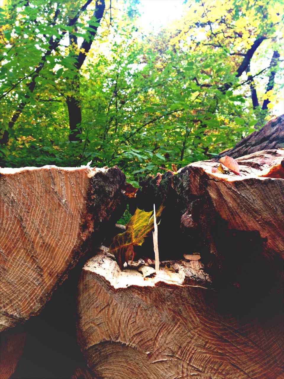 tree, nature, log, wood - material, deforestation, growth, day, no people, lumber industry, timber, outdoors, tree trunk, environmental issues, tree stump, plant, branch, beauty in nature, forestry industry, close-up