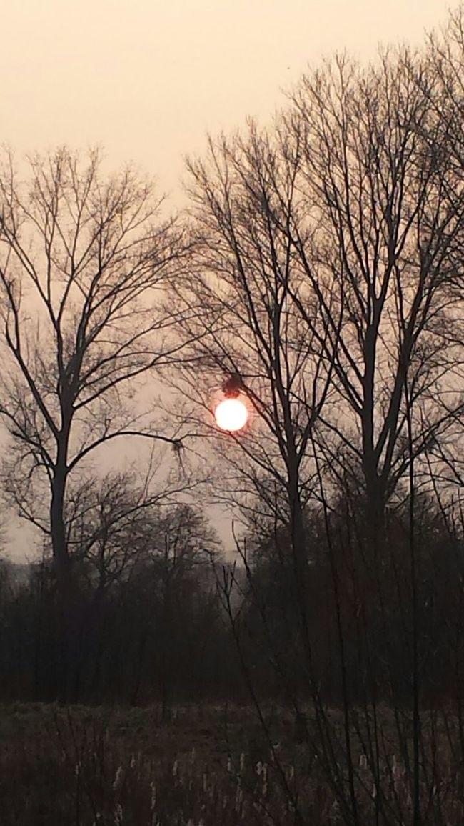 Licht Und Schatten Sunlight Sunset Silhouettes Better Look Twice Täuschung Illusion Optical Illusion Optische Täuschung