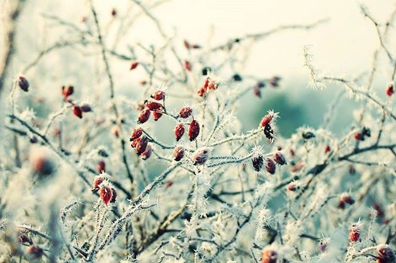 This picture was taken in December of 2013. Unfortunately now winter looks more like spring/summer...:D Nature Winter Cold December Macro Tamron Tamronlens Canera Canon Canon550D Rosé Rosehip Macrophotography Detail Memory Throwback 2013 Eyem Instadaily Instapic Picoftheday