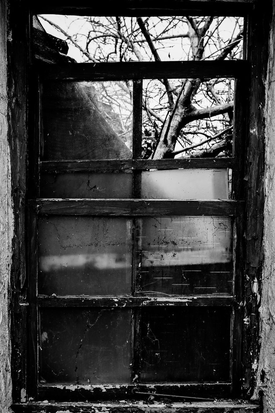 Window Tree Old House Urbex Beauty Of Decay Abandoned Abandoned Places Abandonedporn Ruin No People Monochrome Black And White Taiwan