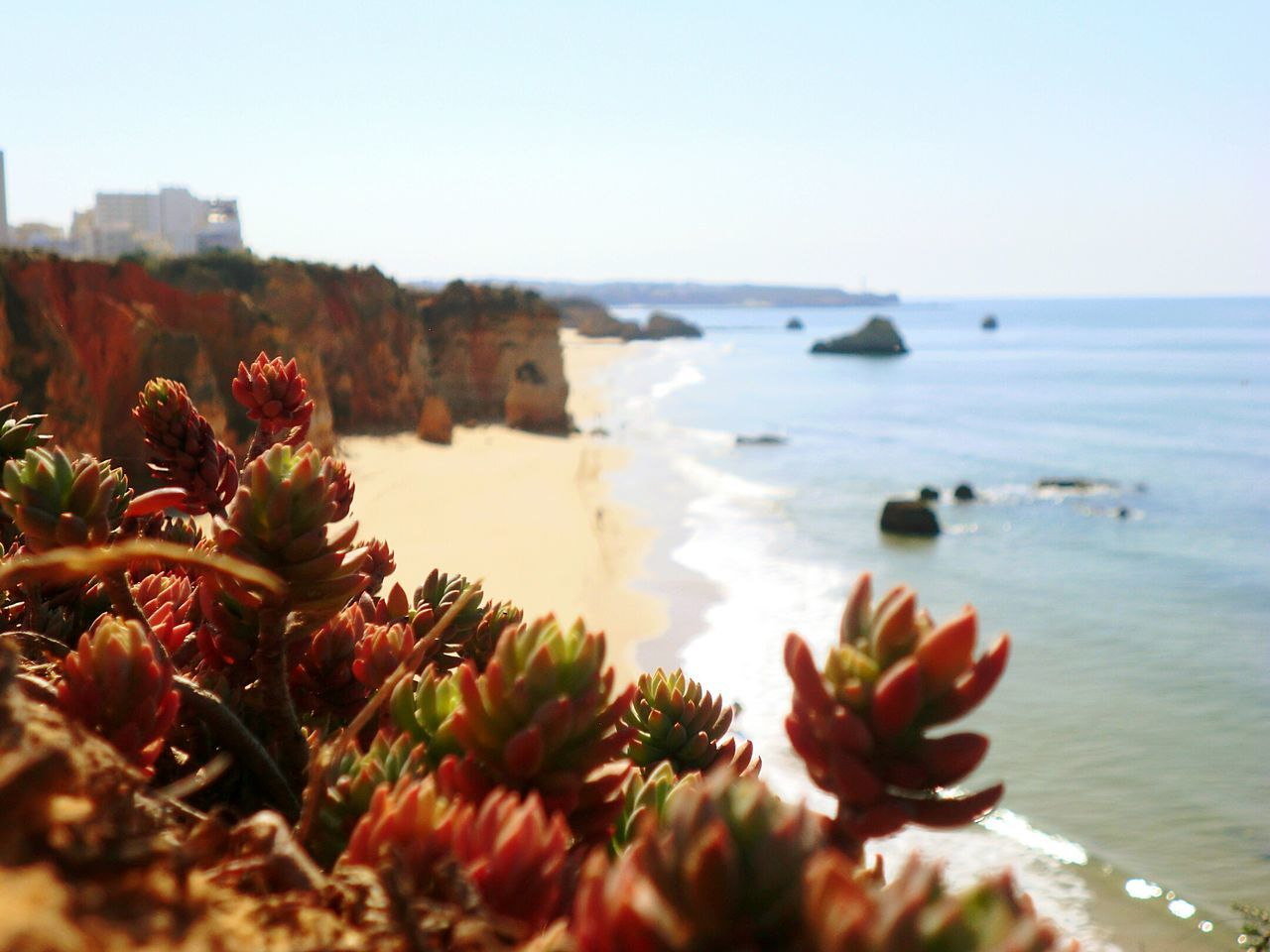 Praia do Vau Taking Photos Portimao Plants Beach Vau Portimão, Portugal Outdoors Beauty In Nature Natureza Local Nature Landscape