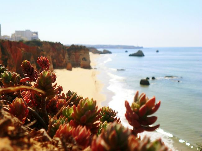 Praia do Vau Taking Photos Portimao Plants Beach Vau Portimão, Portugal Outdoors Beauty In Nature Natureza Local Nature Landscape