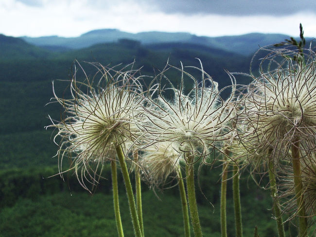 Beauty In Nature Botany Bükk Flower Mountain Flowers Nature No People Plant