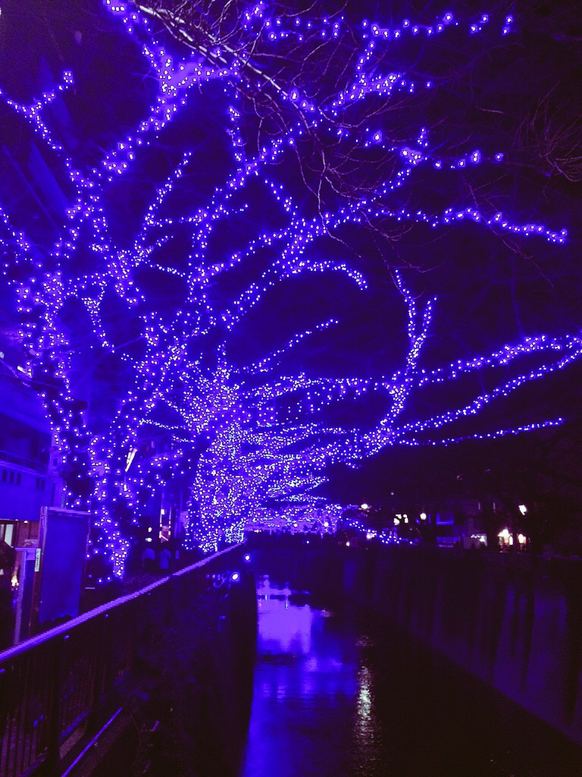 illuminated, night, water, reflection, tree, built structure, lighting equipment, architecture, branch, celebration, long exposure, glowing, motion, decoration, light, waterfront, outdoors, light - natural phenomenon, building exterior, connection