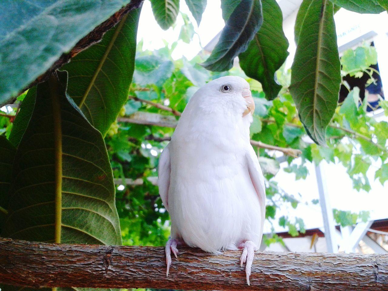 Smart girl Taking Photos Bird Photography White EyeEm Nature Lover Birds_collection