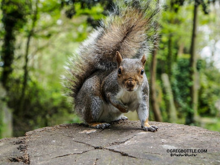 Some more squirrel shots from last year. Squirrel Squirrels Wildlife Urban Wildlife