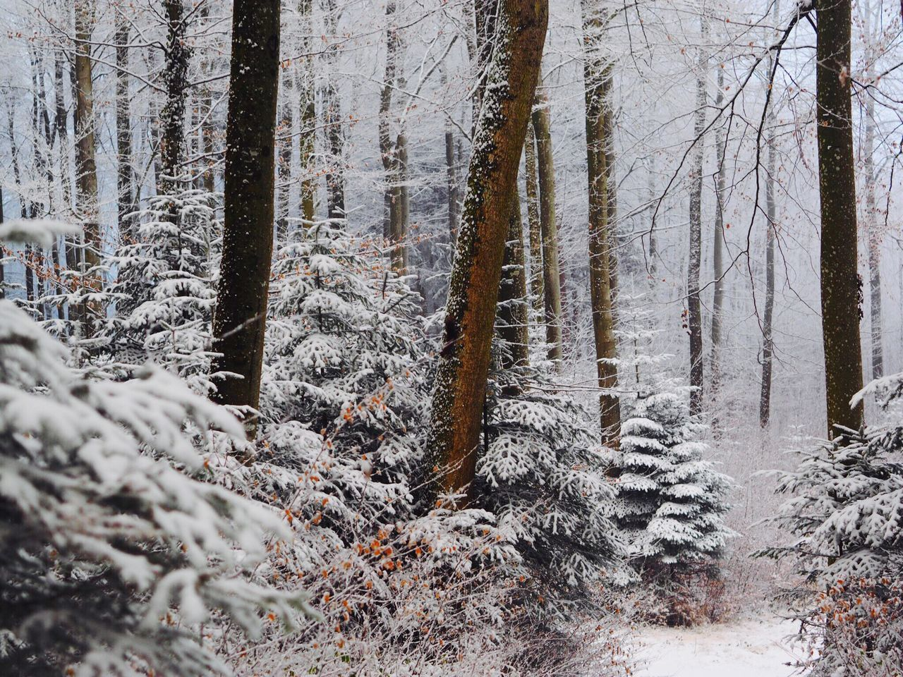 Winter Cold Temperature Tree Snow Forest Nature Beauty In Nature Scenics WoodLand Weather Tranquility Frozen Tranquil Scene Branch Outdoors Day No People Winter Wonderland at Gempen,switzerland