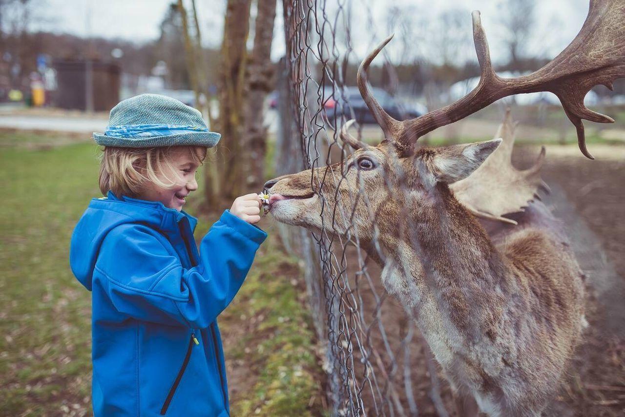 Beautiful stock photos of hirsch, one person, animal themes, males, children only