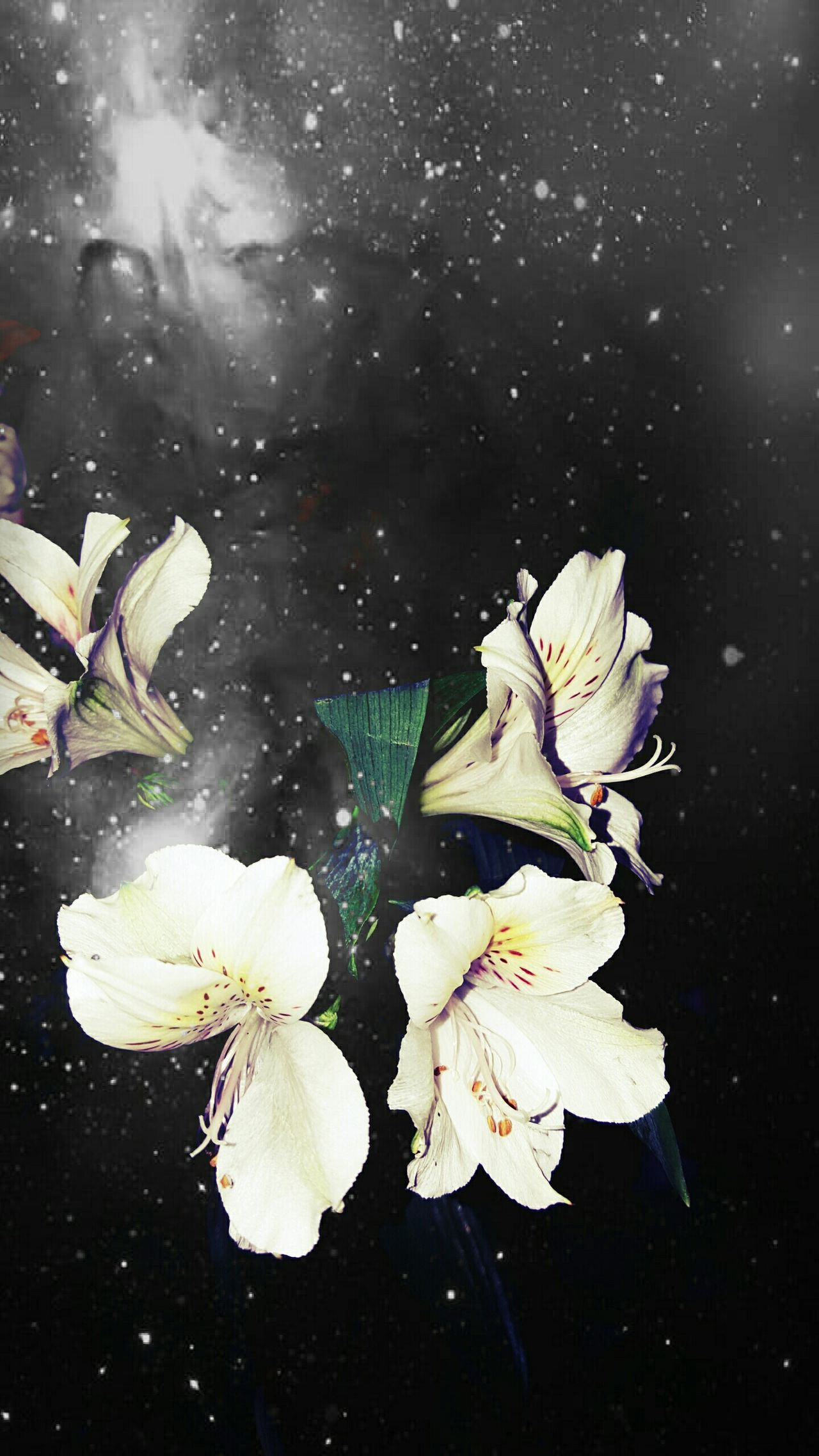 Bored waiting for a train and ended up back on Pixlr Flowers Edit Space Photography Mine Anniversary Anniversary Flowers Wedsing Anniversary Parents