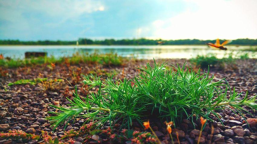 Lakeside Ecosystem  Grass Landscape Nature Moto X Play