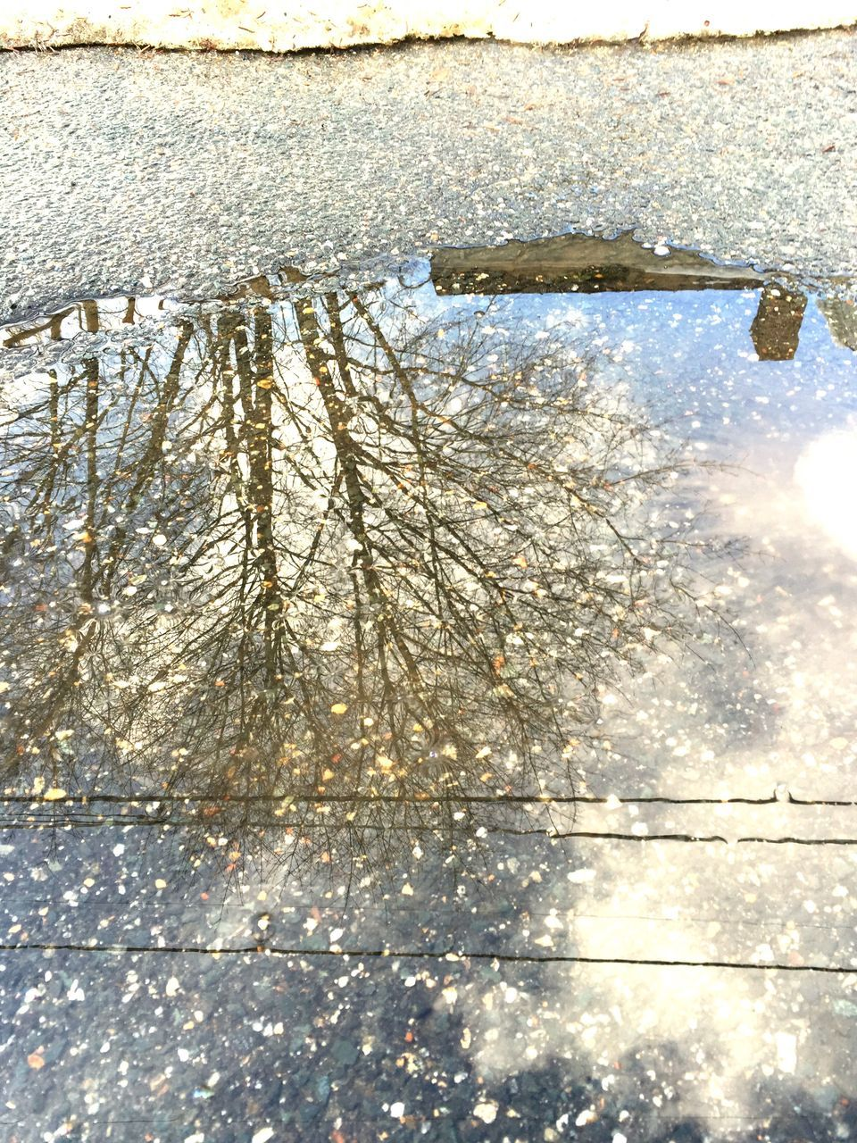 Close-Up Of Reflection Of Trees In Puddle