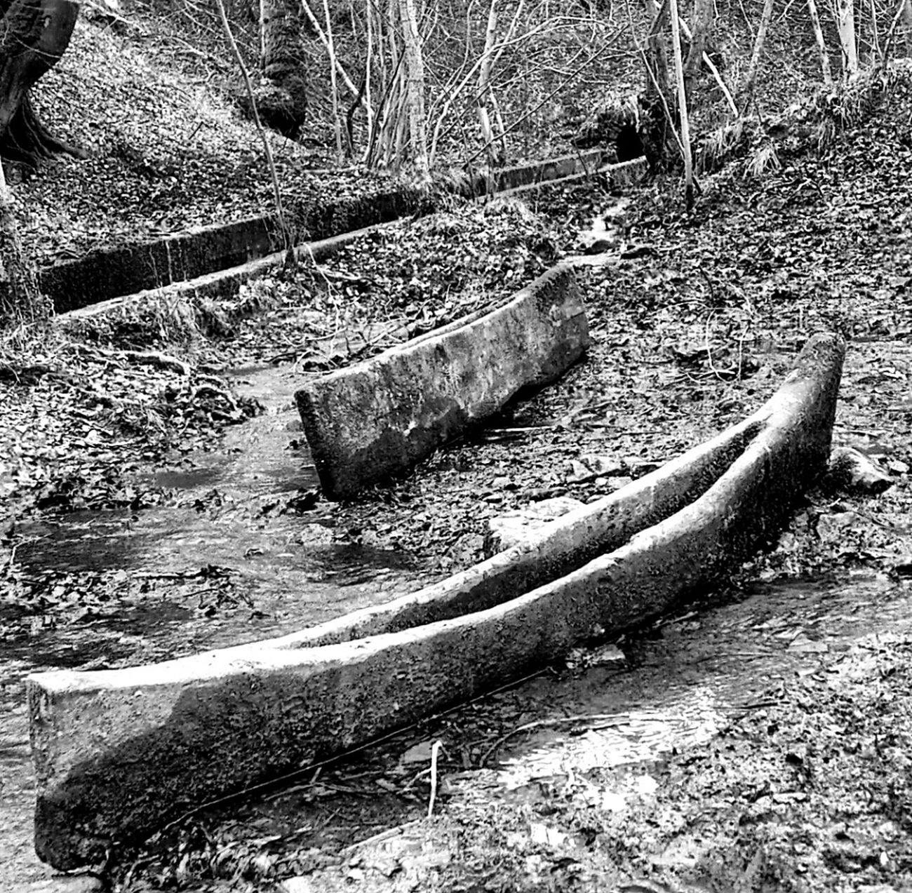Blackandwhite Sculpture Trail