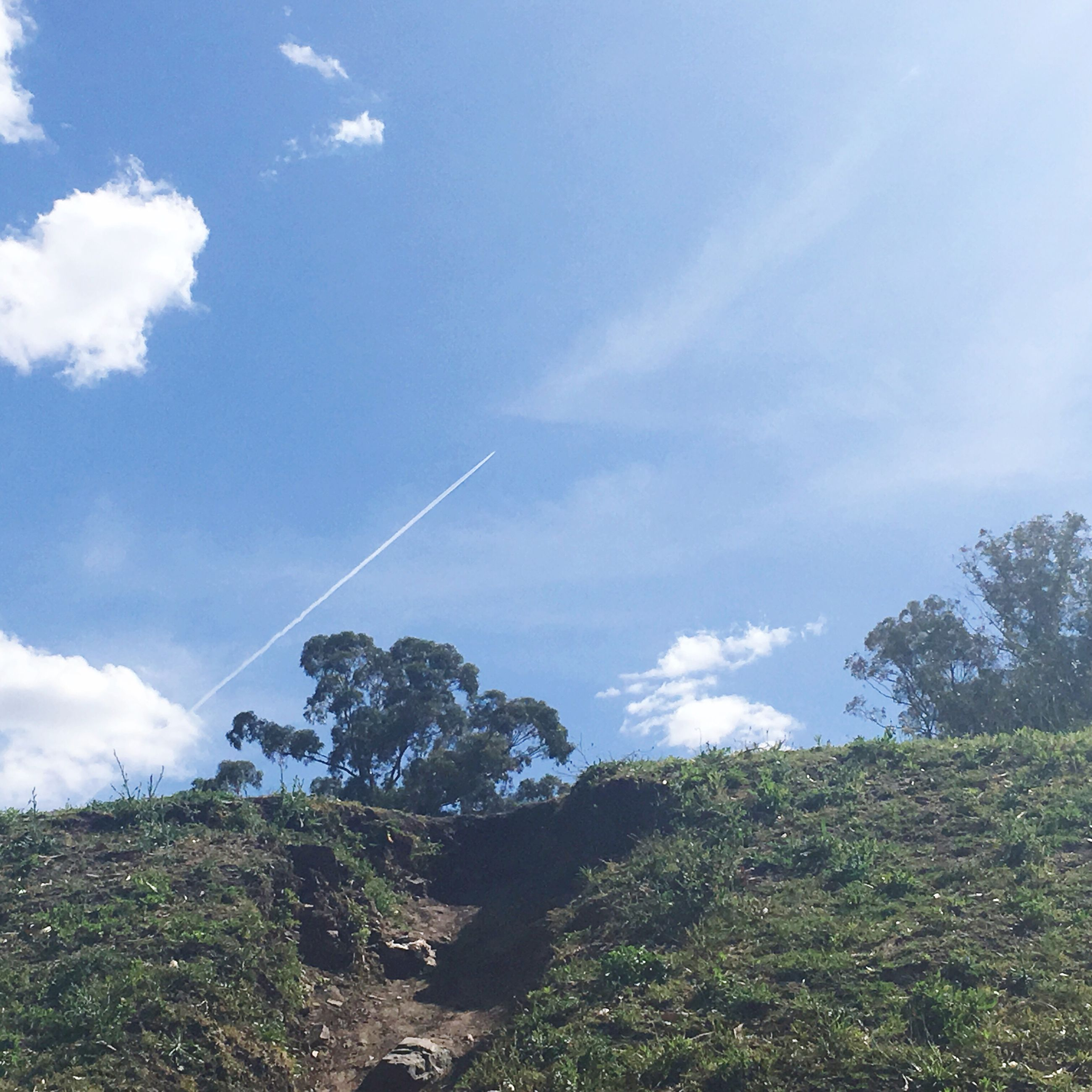sky, nature, low angle view, beauty in nature, tree, scenics, no people, vapor trail, growth, outdoors, cloud - sky, tranquility, day, contrail