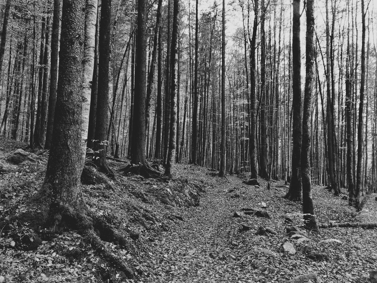 Path and trees Mexturesapp EyeEmSwiss Streamzoofamily Trees Forest Path EyeEm Nature Lover EyeEm Bnw