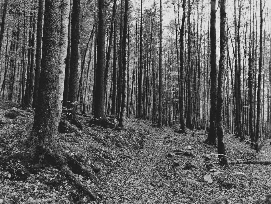 Path and trees Mexturesapp EyeEmSwiss Streamzoofamily Trees Forest Path EyeEm Nature Lover EyeEm Bnw