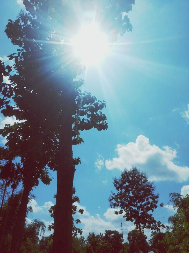 Nature Sunbeam Sky Outdoors No People Tree Low Angle View Blue Sunlight Sky And Clouds Naturelover Nature_collection Nature Is Art Beautiful View Beauty Beautiful Day