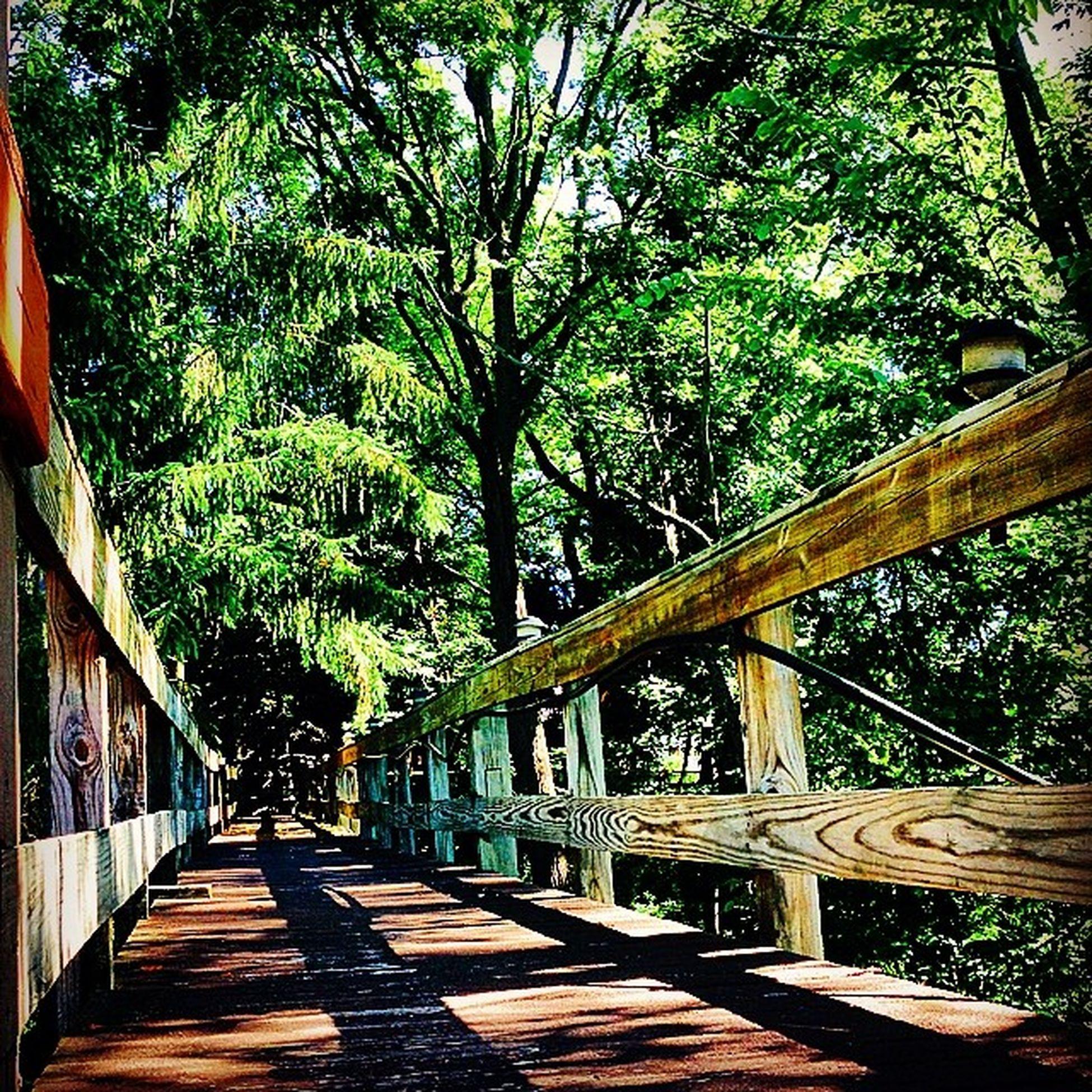 Just a bridge to the jungle Summertime Walkway Scenic 607compound jungle picoftheday architect upstate newyork ny