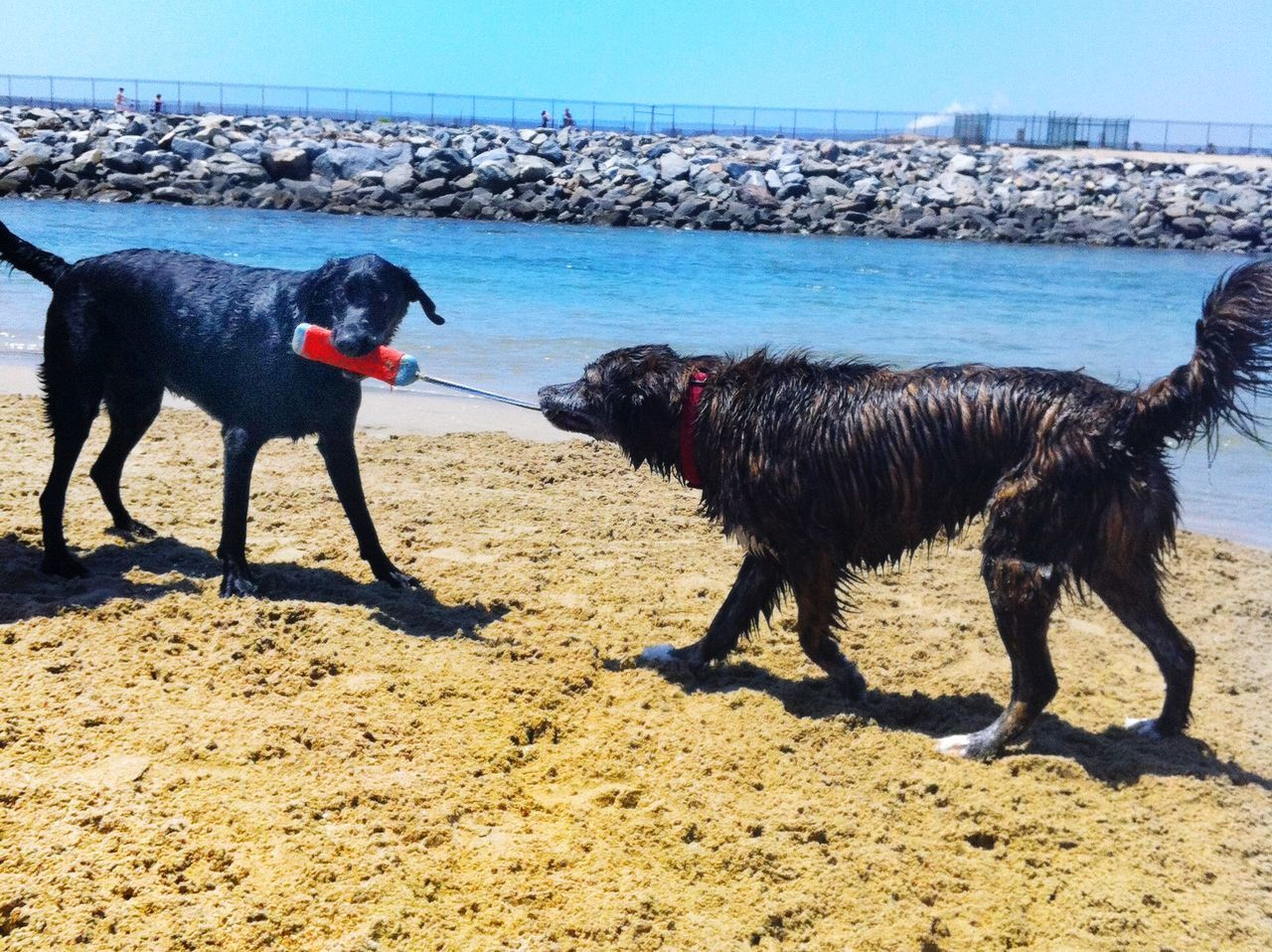 Dog Love Enjoying The Sun 🐾Yoko's Holiday POV Dogs Dog Dogs Of EyeEm Dogstagram Dog On Beach