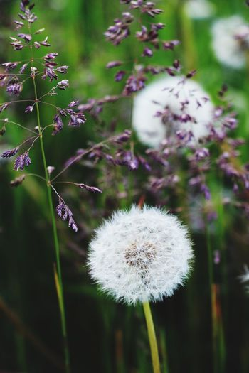 Autumn last year Fragility Flower Nature Growth Plant Dandelion Softness Focus On Foreground White Color Beauty In Nature Day Freshness Flower Head No People Close-up Outdoors