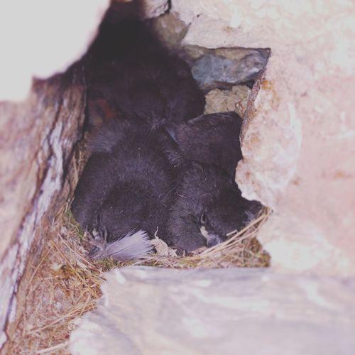 Nido de pollitos :3 Pajaros Pollitos Pirineos Cerdanya Catalunya Relaxing Bolvir Animals