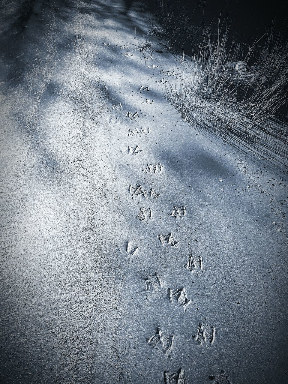 footprint, winter, paw print, no people, cold temperature, day, track - imprint, sand, snow, nature, outdoors, close-up