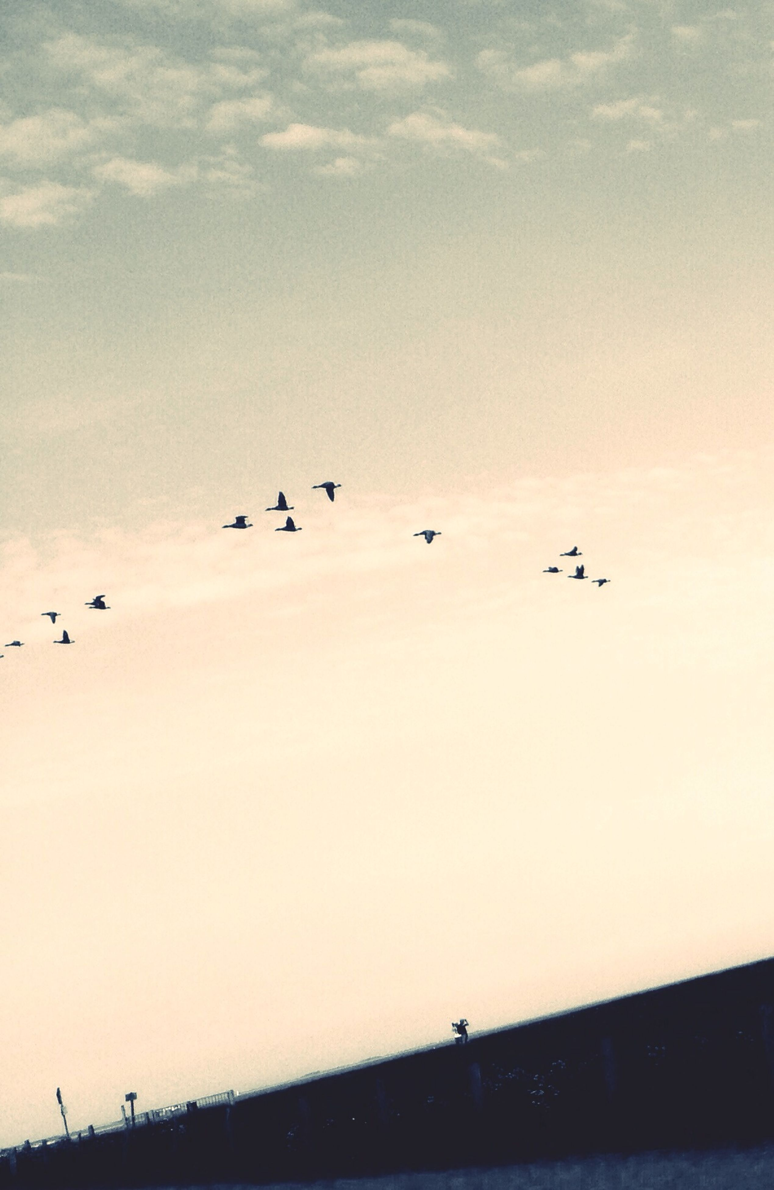 bird, flying, animal themes, animals in the wild, flock of birds, wildlife, silhouette, sky, mid-air, medium group of animals, low angle view, sunset, nature, transportation, beauty in nature, outdoors, built structure, scenics, cloud - sky