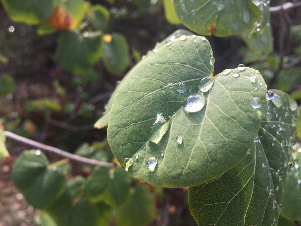 leaf, drop, nature, growth, green color, close-up, day, plant, beauty in nature, focus on foreground, fragility, wet, outdoors, freshness, water, no people
