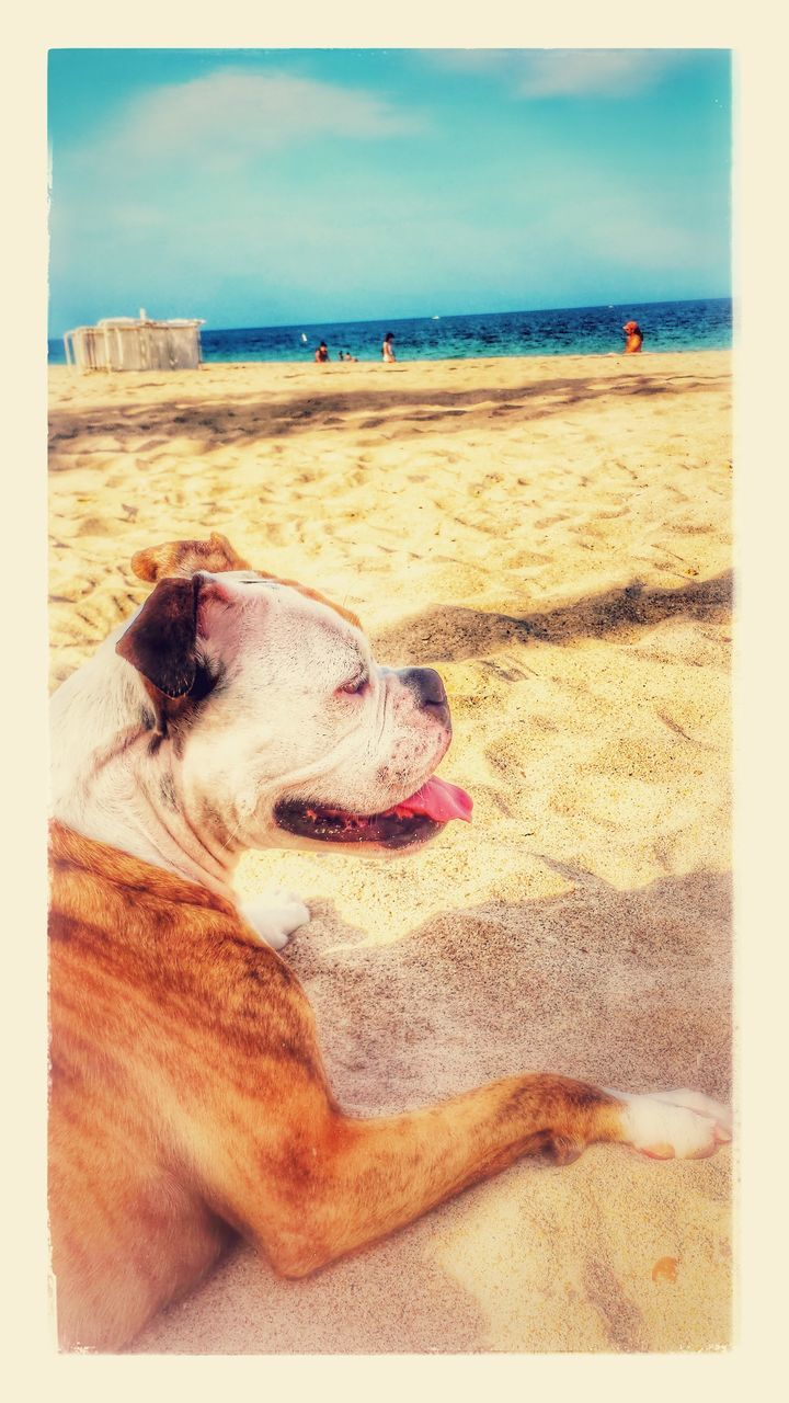 beach, dog, sea, horizon over water, pets, one animal, auto post production filter, domestic animals, animal themes, sand, sky, mammal, relaxation, day, nature, water, outdoors, tranquil scene, no people, sticking out tongue, scenics, beauty in nature, close-up