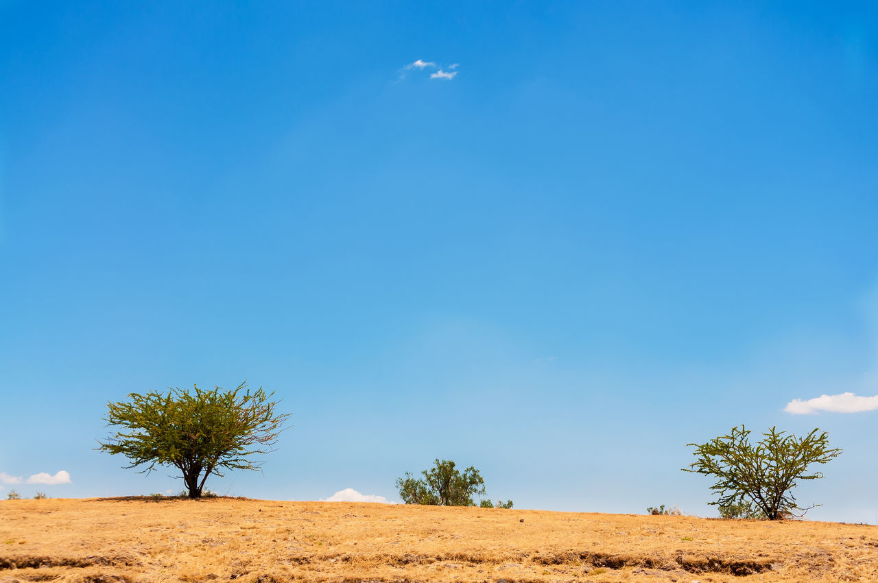 Three trees growing in a barren arid landscape outside of Mexico City, Mexico Arid Blue City Cloud Country Countryside Df Dry Field Horizon Landscape Mexican Mexico Mexicocity  Natural Nature Outdoors Rural Scene Scenic Scenics Sky Tree Trees Urban
