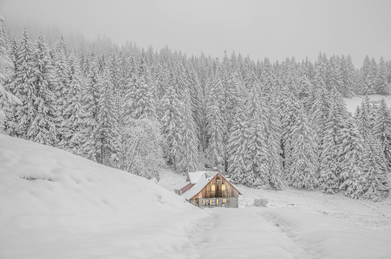 Architecture Beauty In Nature Chalet Cold Temperature Countryside Forest Landscape Landscape_Collection Mountain Nature Scenics Sky Snow Spring Tree Vosges Weather White Winter The Great Outdoors - 2017 EyeEm Awards