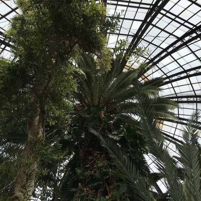 Belle Isle Detroit Palm Tree Pattern Tree Tree Trunk