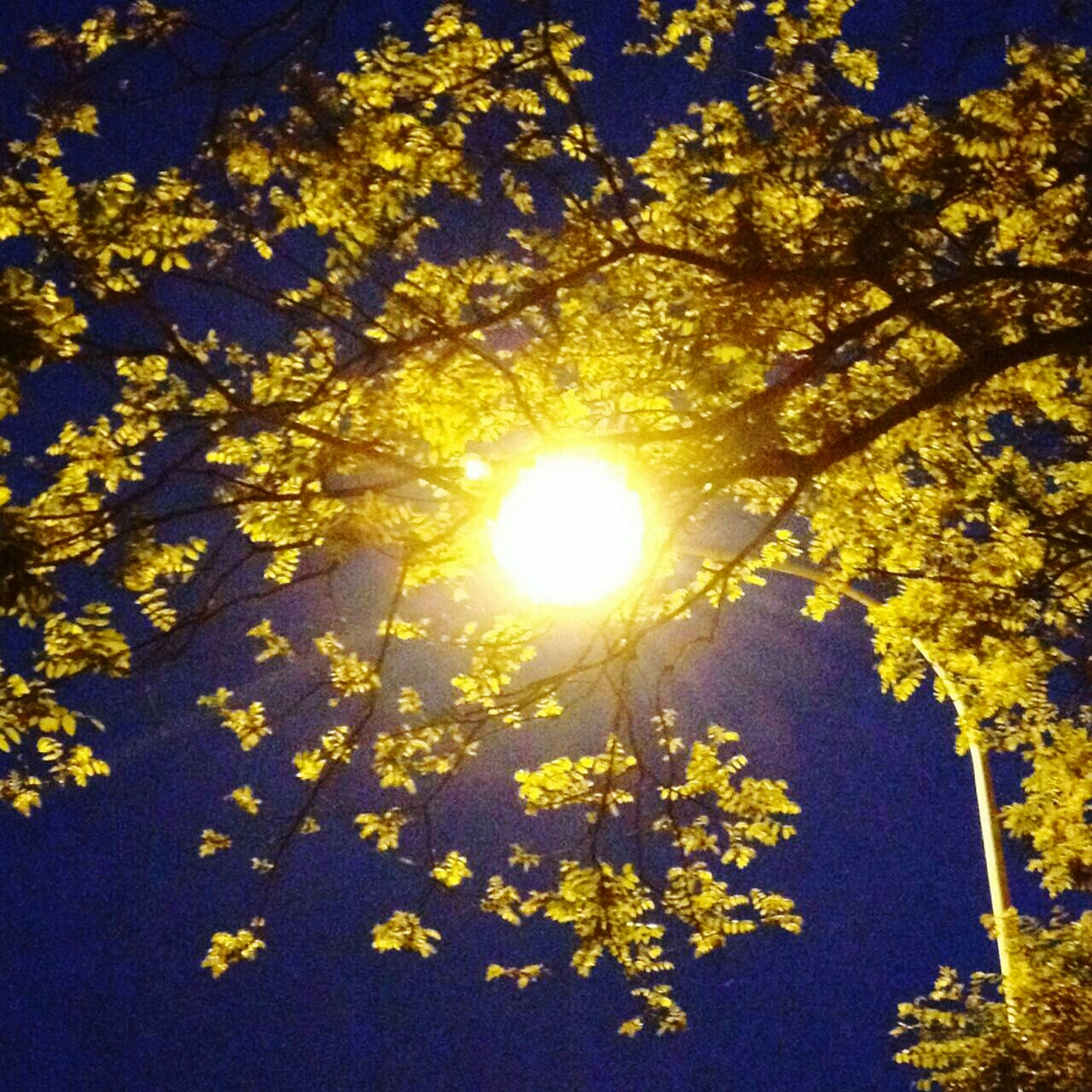 tree, branch, low angle view, sun, growth, beauty in nature, sunlight, nature, tranquility, sunbeam, yellow, sky, lens flare, leaf, clear sky, scenics, no people, outdoors, tranquil scene, day