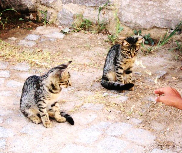 Cat Cats Catlovers Kitty