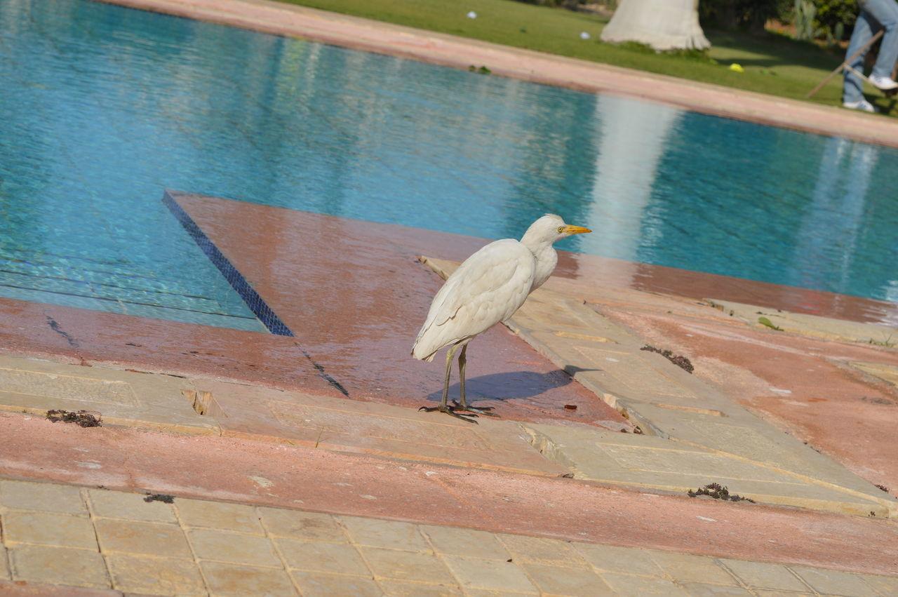 الجمال  الحريه الطبيعه بسيتين طيور