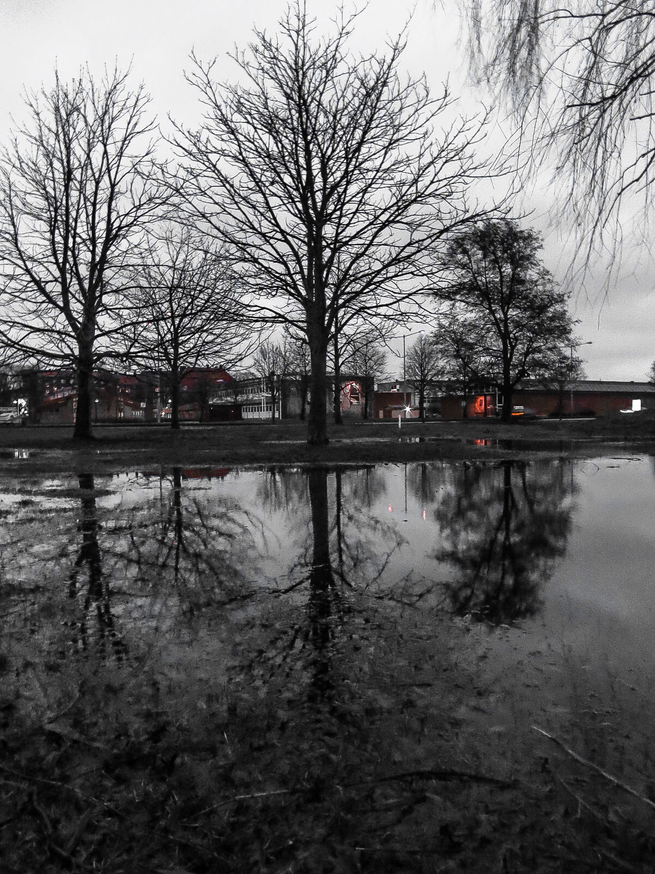 Landscape Trees Reflections Evening Walk