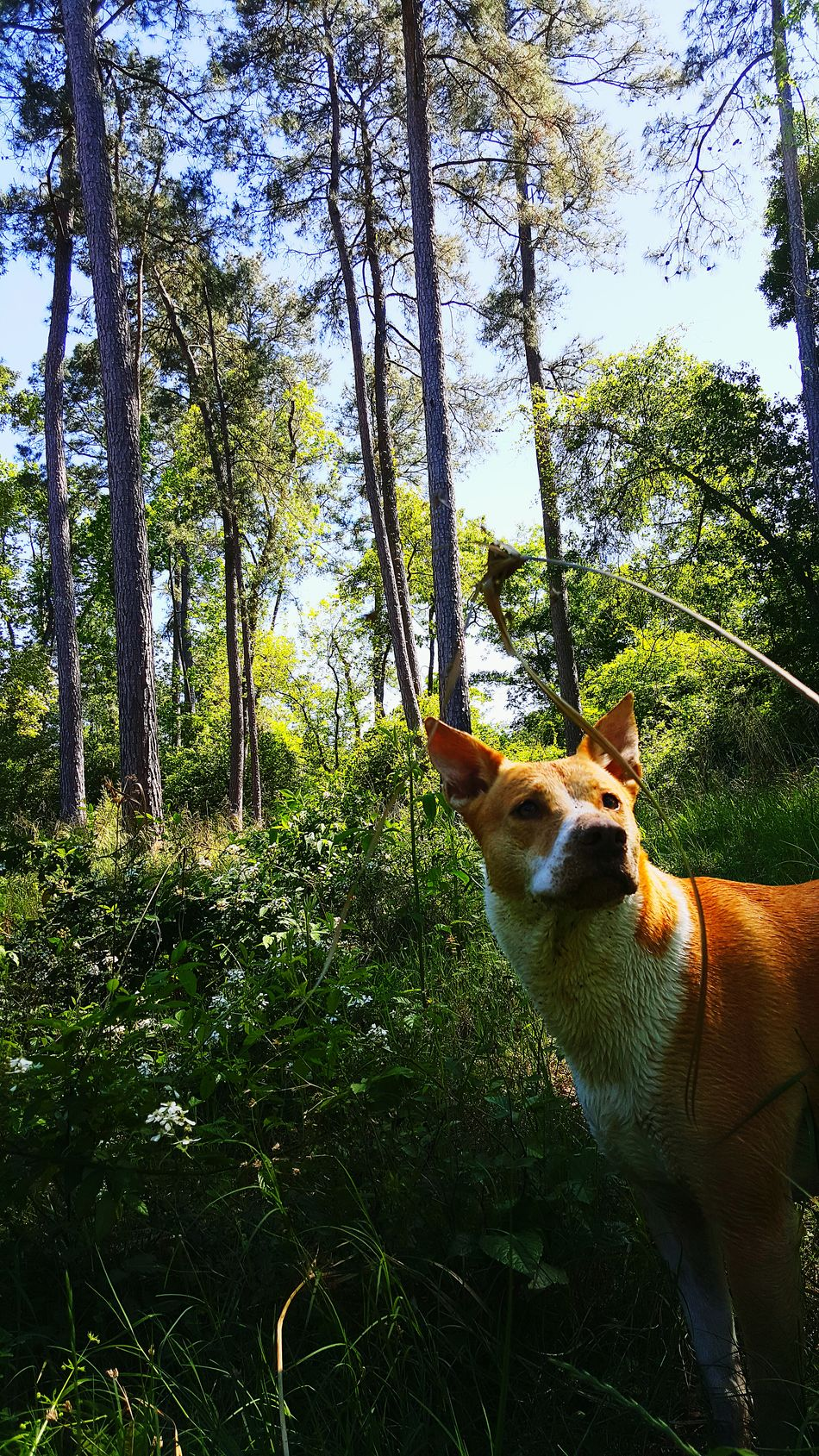 Check This Out Things I Like Dogslife Things That Are Green Nature_collection Dog Photo Dog Photography Showcase April The Great Outdoors With Adobe The Great Outdoors - 2016 EyeEm Awards