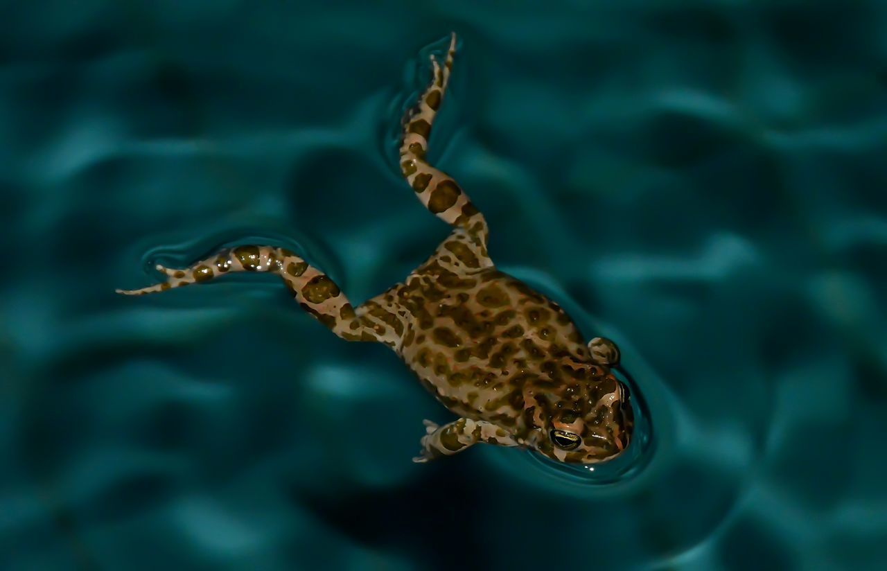 Animal Themes Animal Wildlife Animals In The Wild Beauty In Nature Close-up Day Nature One Animal Outdoors Swimming Water